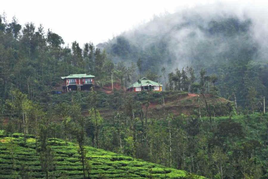 Green Homestay Amidst Plantation Estate