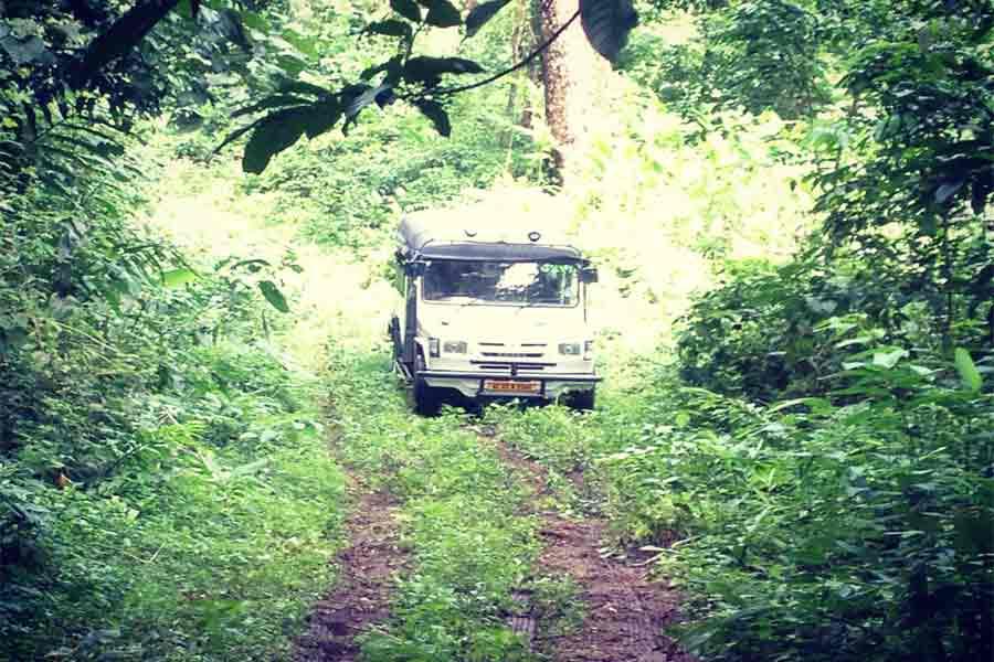 Gavi forest drive