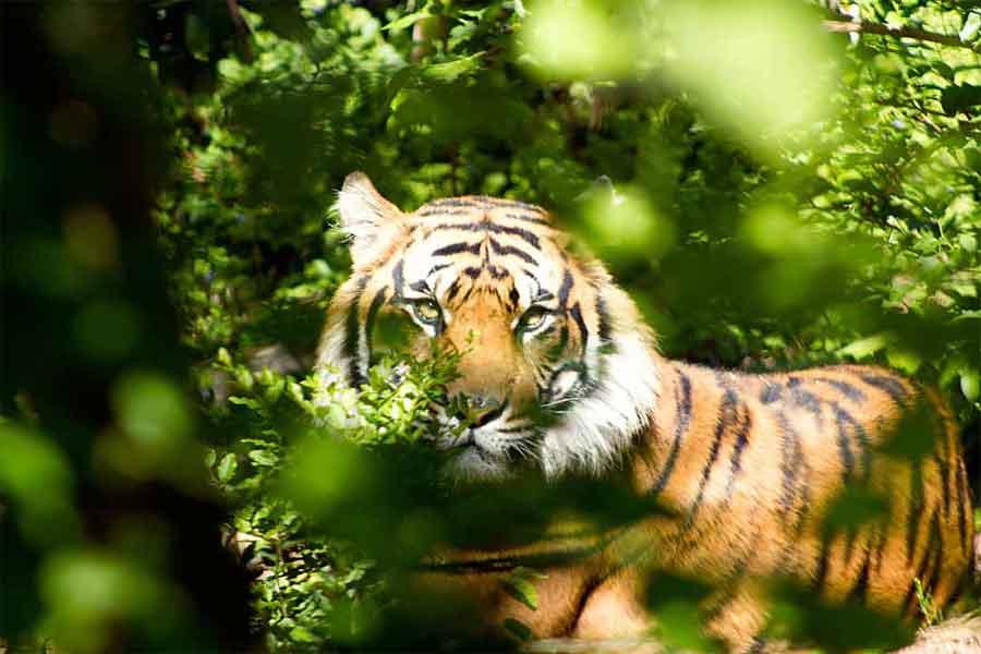 Gavi Forest in Kerala, Online Travel Guide