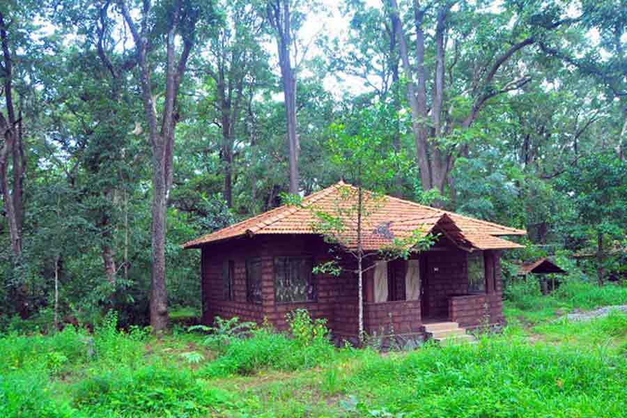 Forest Bungalow - Best Places to holiday this New year