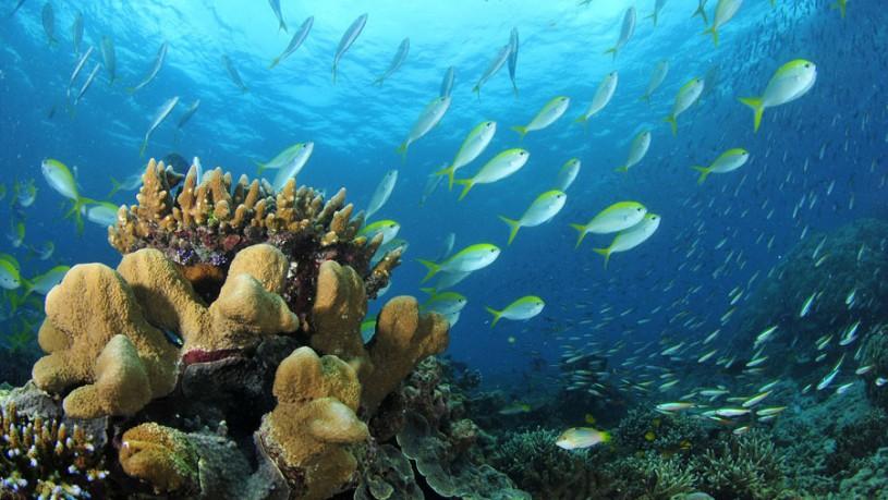 Scuba Diving At Chidiya Tapu - Clear visibility