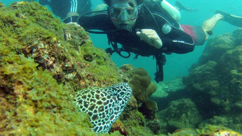 Sucba-Diving-at-Netrani---Underwater-experience