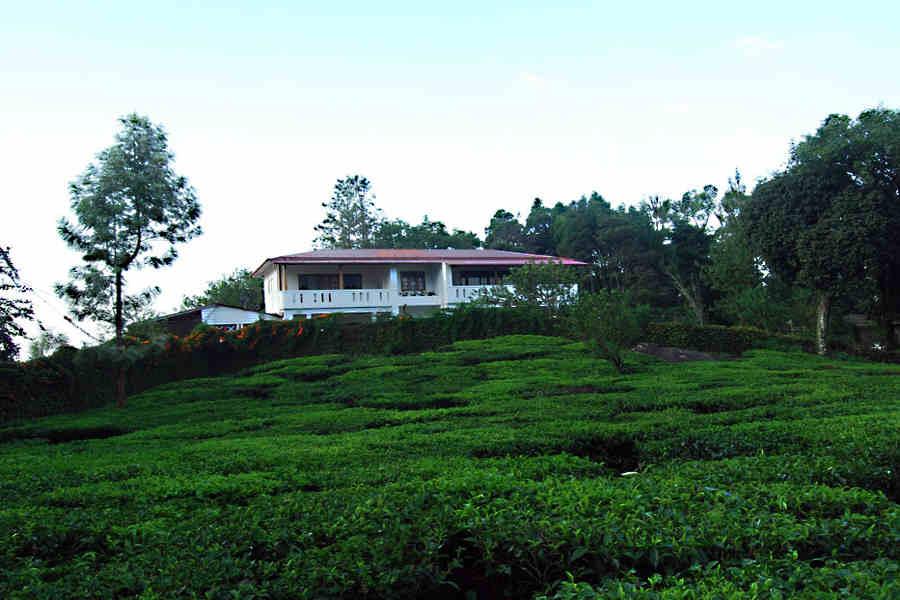 Tea gardens at the Plantation Estate at Pothamedu