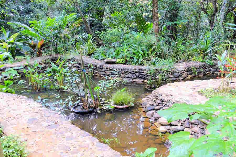 Pond at Serene Forest Resort And Spa Near Baindur