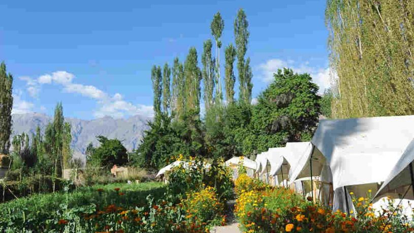 Beautiful Campsite At Sumur In Nubra Valley