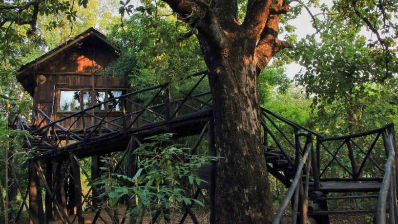Luxury Treehouse At Bandhavgarh