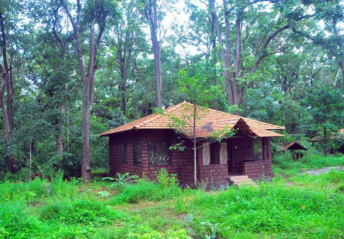 Eco-friendly Homestay at Sangave, Dandeli