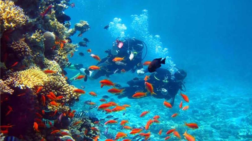 Scuba Diving at Andaman