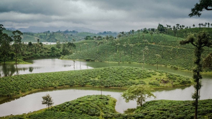Valparai Tea Estate view