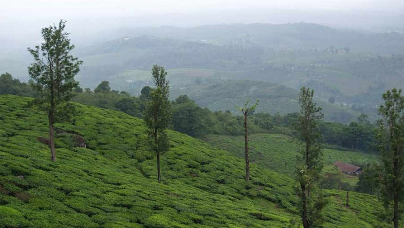 Wayanad - Online Travel Guide