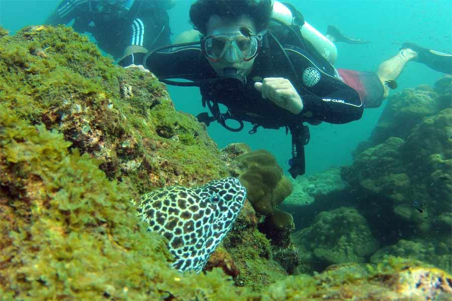 Sucba-Diving-at-Netrani---Underwater-experience