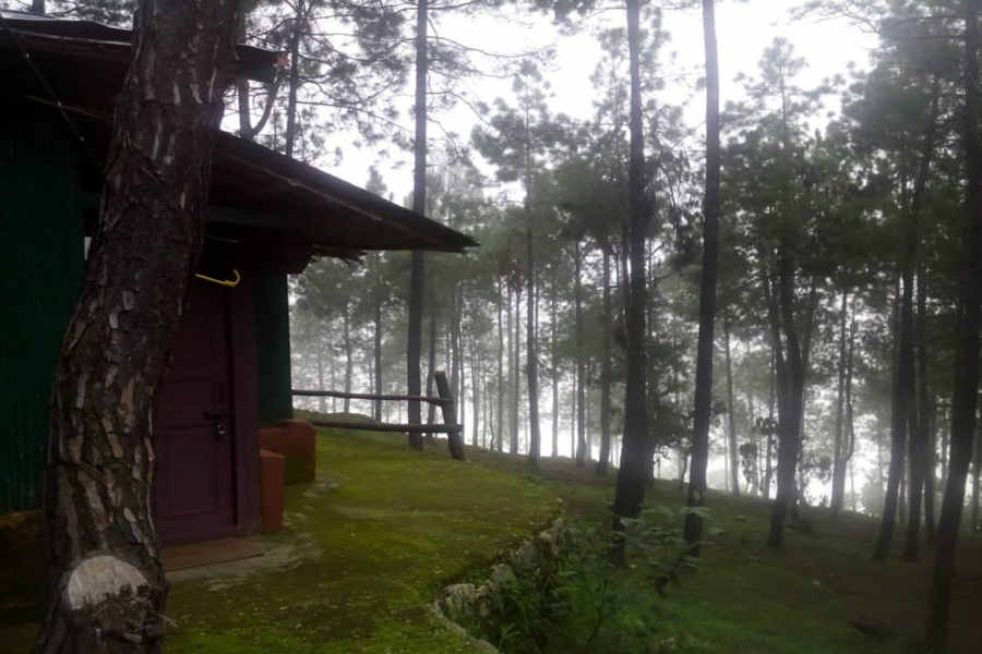 Pine woods at the Eco Lodge at Vijaypur in Kumaon