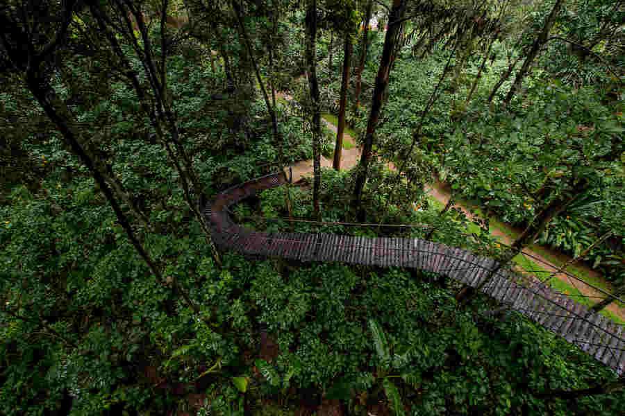 Woodpecker Tree House_ Walkway at the Plantation Bungalow at Chulliyode