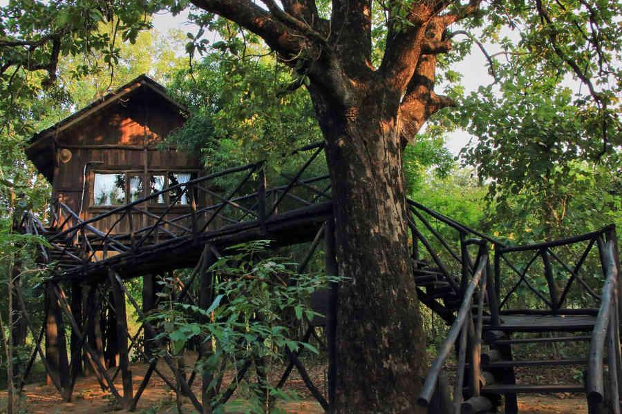 Selfroadiez Luxury Tree House At Bandhavgarh Selfroadiez