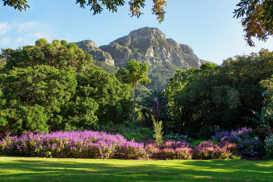 Kirstenbosch Botanical Gardens Landscape Nature Tree-Cape Town